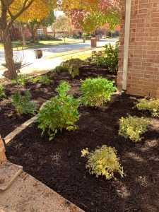 Fort Worth Landscaping Services