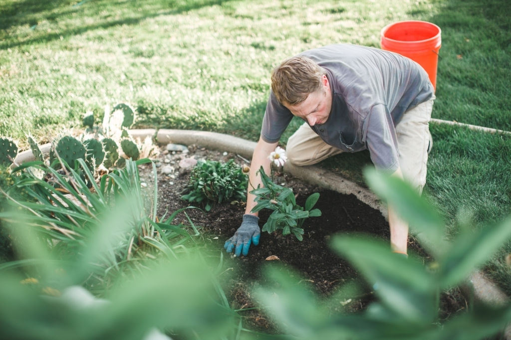 professional landscaping services texas